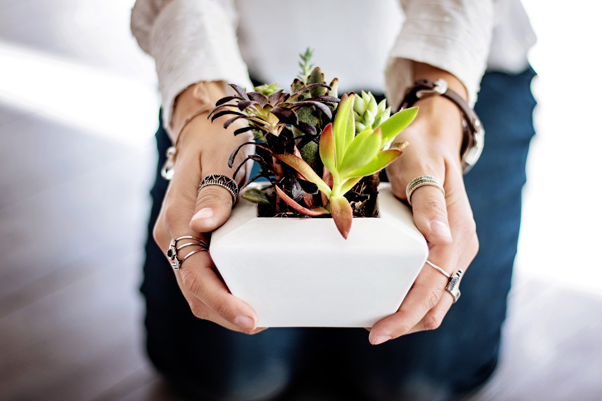 DIY – Succulents
