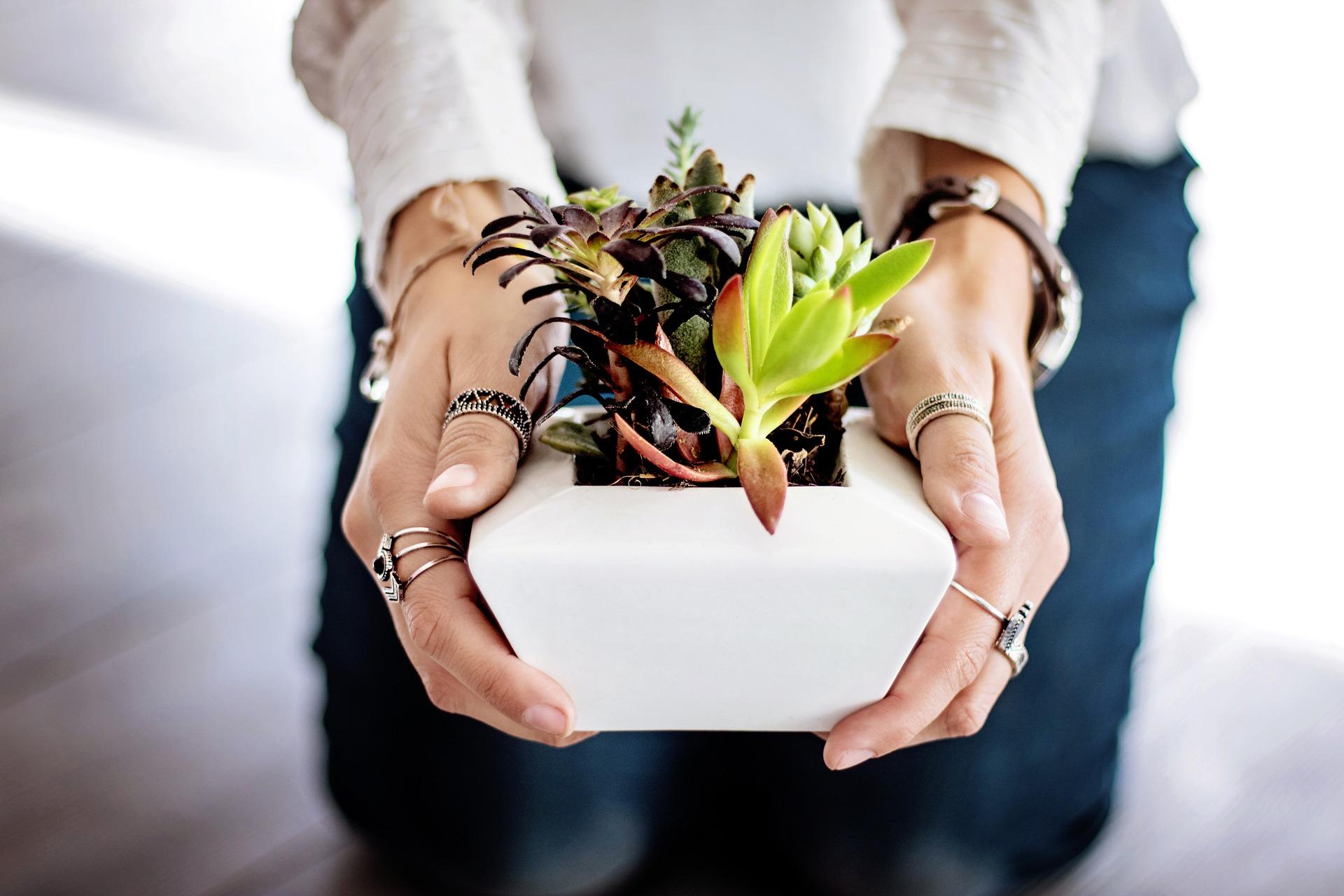 DIY – Succulents