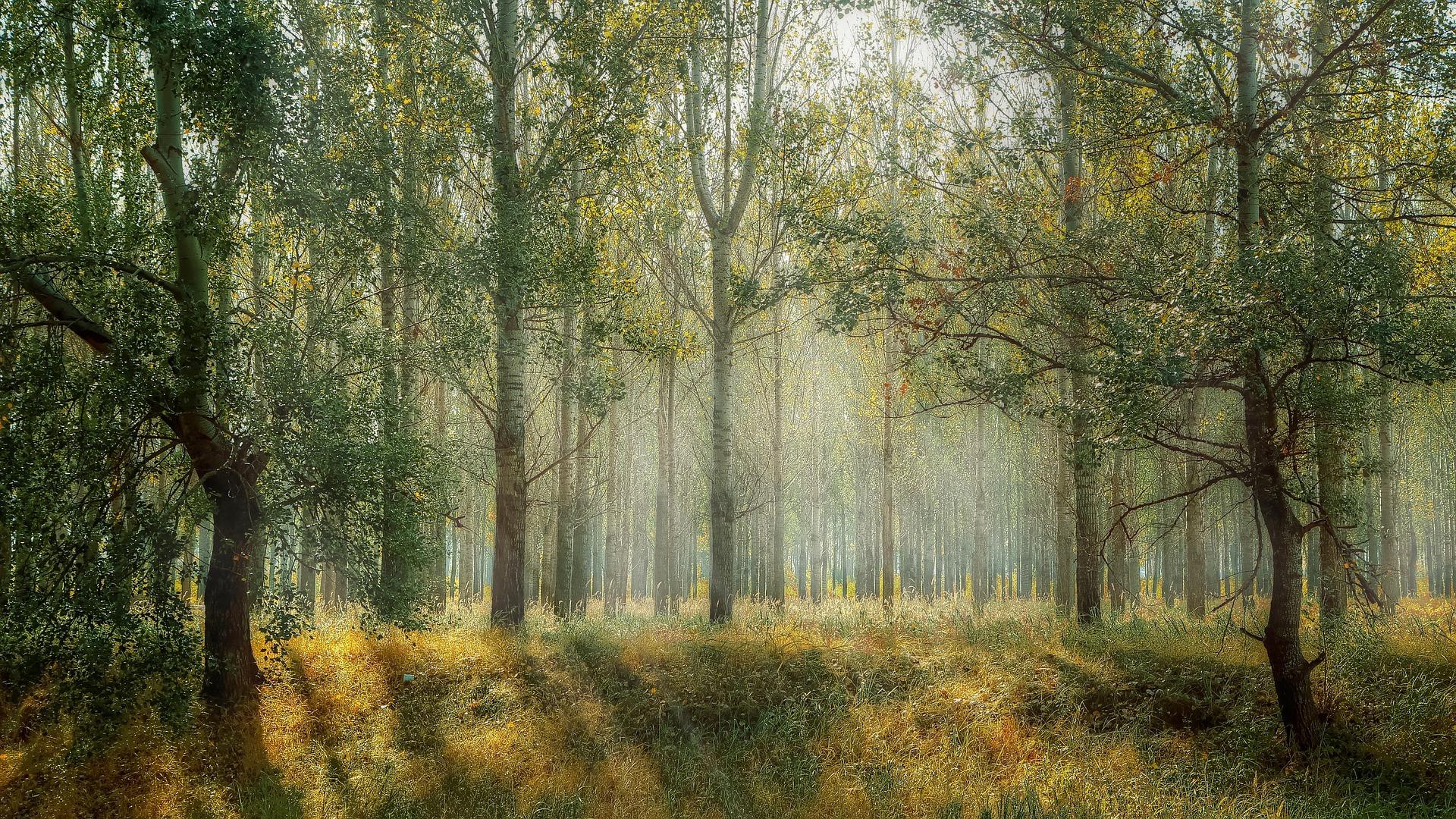Green Foggy Forest